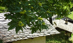 Herbst - Kastanienzeit
